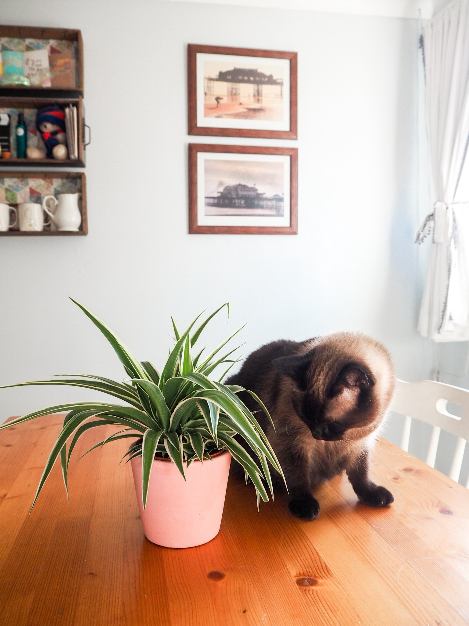 Ghenet Actually || Indoor Plants That Won't Bother Your Pets