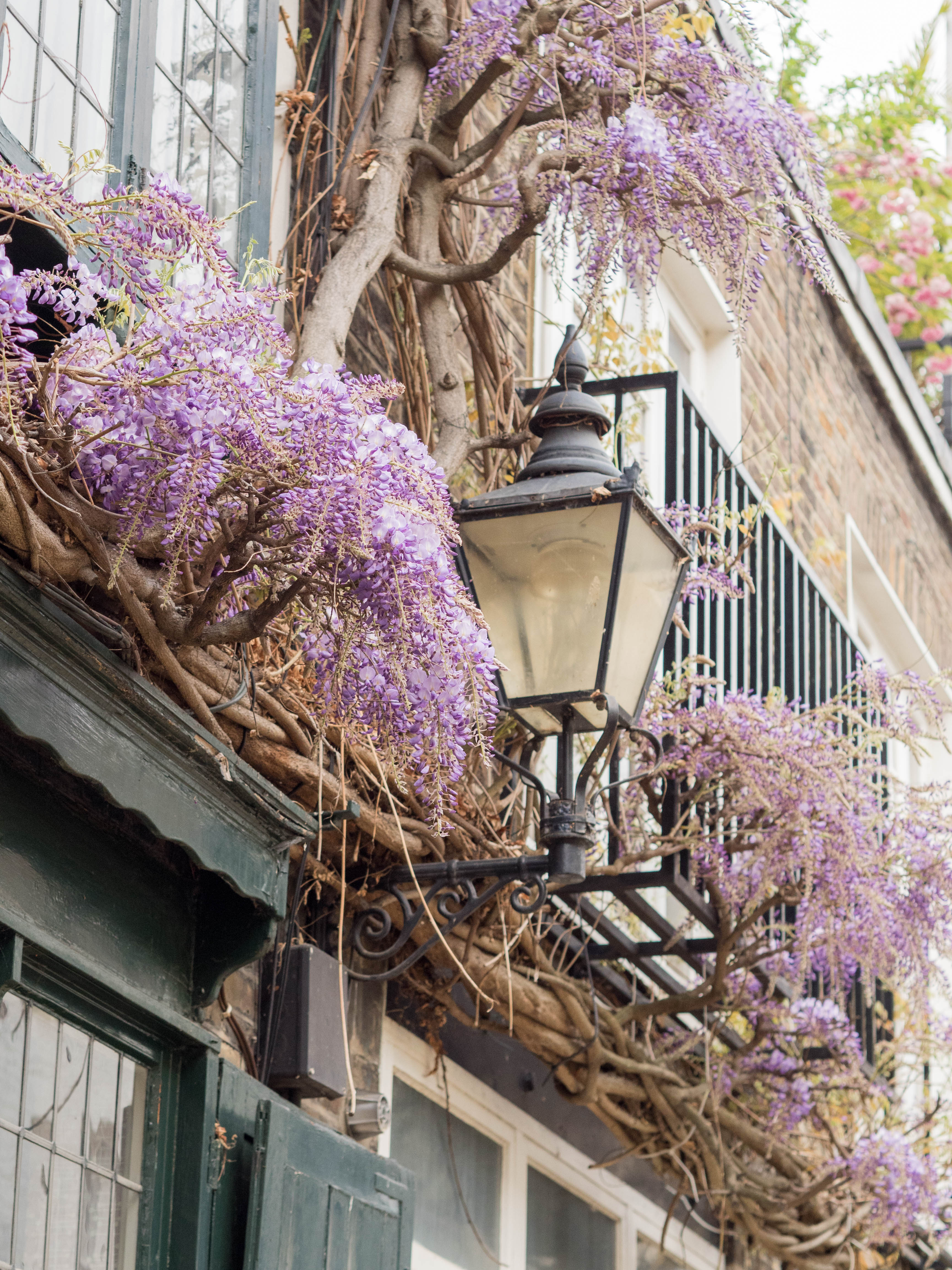 Ghenet Actually || 6 Places in London to Spot the Best Wisteria