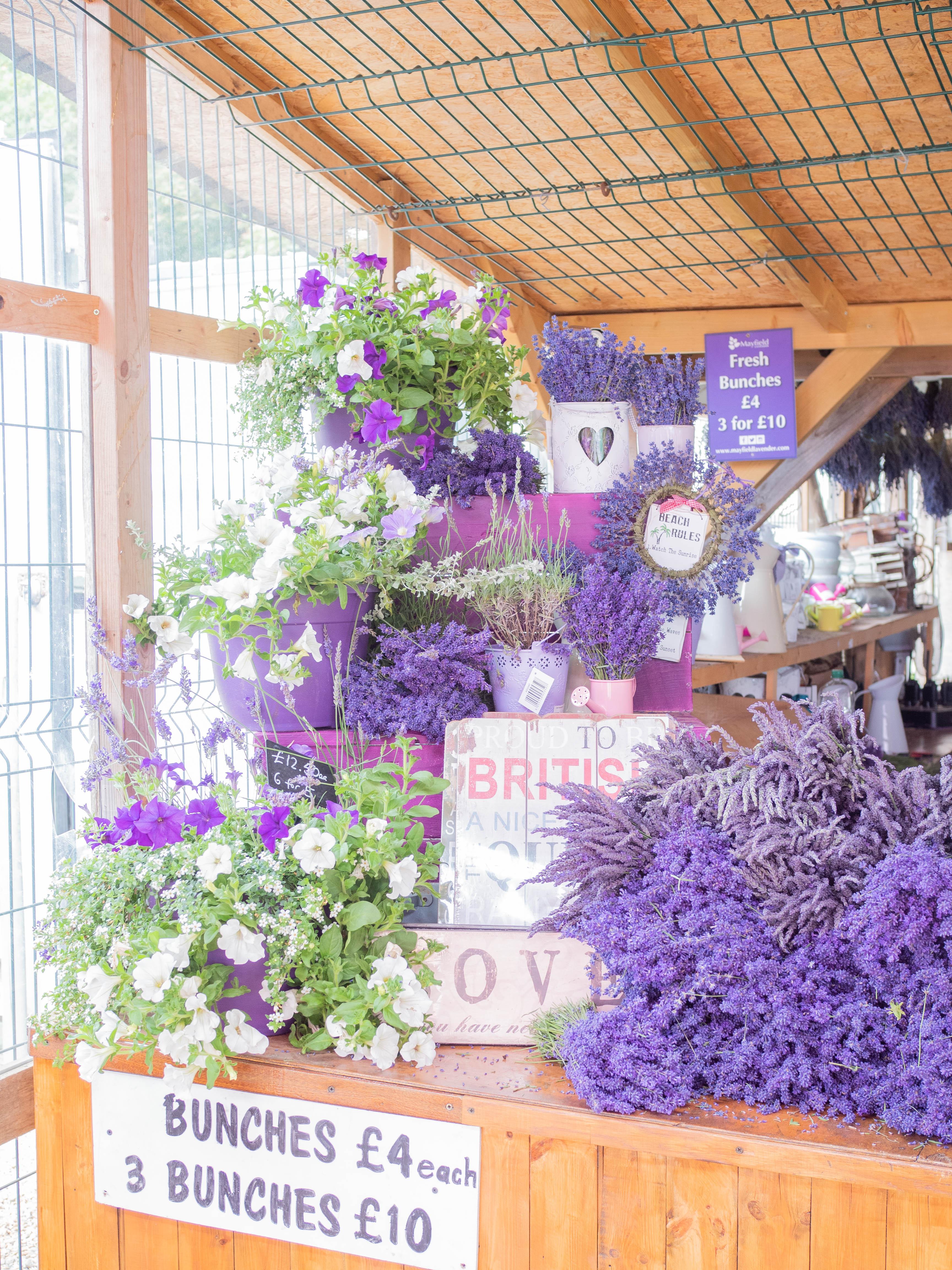 Bundles of lavender on display at Mayfield Lavender Farm